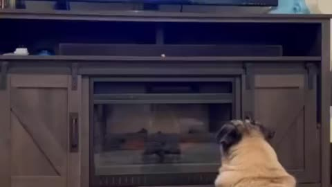 Funny puppy video doing zumba