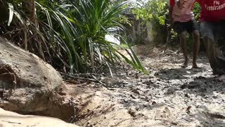 Family crocodile Saved From Python Snake Attack