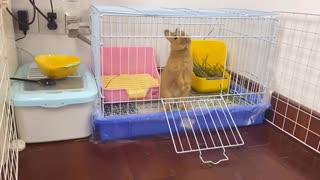 Watch This Rabbit Escape Prison