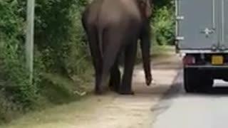 elephant pushing breakdown vehicle sri lanka