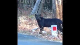 Bast Funny animals videos 2021 funnyanimalvideos