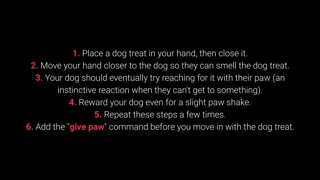 Basic Training for your Dog – TOP 10 Essential Commands Every Dog Should Know