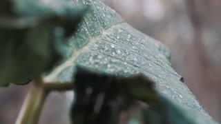 Rain sound for meditation and soundless sleep