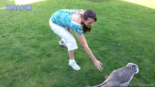 Super Funny Moments Human and Animals Fails of 2019 Weekly