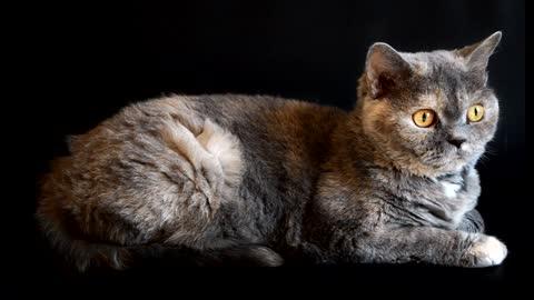 Cat playful big eyes - cute cat