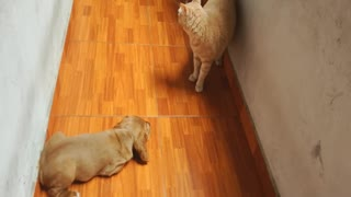 Adorable Puppy chases cat