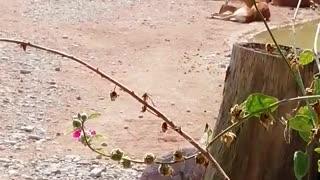 animali nella natura in italia