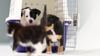 CUTE PUPPIES AND KITTENS PLAYING
