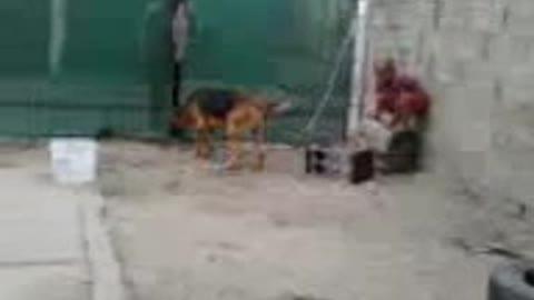 boy wrestling dog