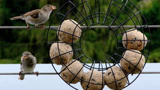 cute Birds Eating