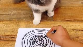 Dizzy Cat Video