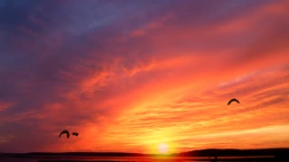 Sunrise,birds,nature,clouds, No Copyright, Copyright Free Video, Motion Graphics, Background Video