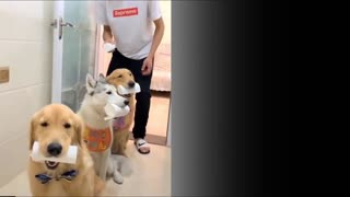 😹Cute Pets And Funny Animals Compilation #17