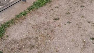 Ducklings Take a Tumble