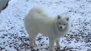 Dogs First Time Seeing Snow