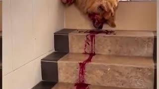 Dog ate dragon fruit