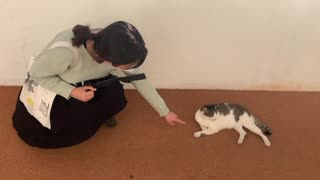 a cat and a girl trying to connect with a cat in her way