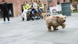 Brown Dog Running Freely