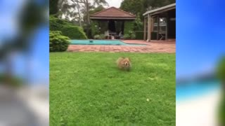 funny animal moments,cute animal actions