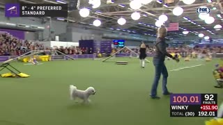 The best WKC Dog Show moments to celebrate National Puppy Day