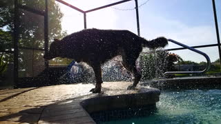 Wet Dog shaking off outside of pool water everywhere