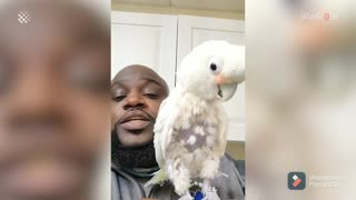 Cockatoo dances his heart out as New Yourk beatboxes