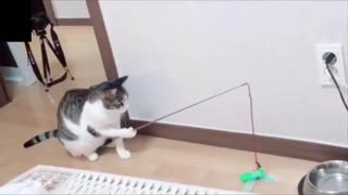 Watch these funny and awesome animals