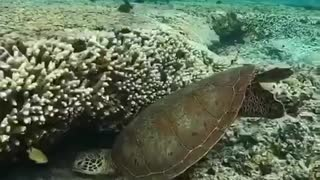 Under water places