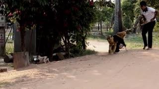 Funny Video   Fake Tiger Prank Video