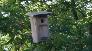 Bird house nestled among trees