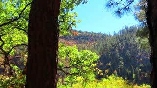 Arizona Chevelon Canyon Lake Fall colors 2020