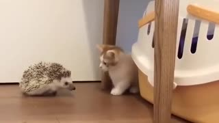 Cute kitten and little hedgehog