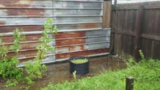 My yard after Hurricane Sally