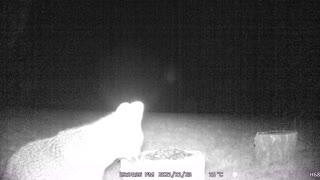 Fox Night Vision Camera!
