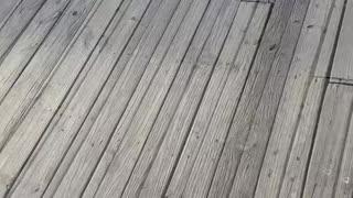 Crazy Sun Dog at Myrtle Beach