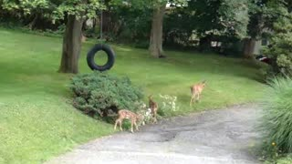 Little Deer with Mama