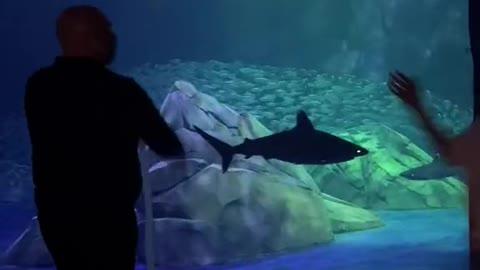 Georgia Aquarium's New Shark Exhibit TikTok