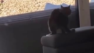 Cat Crashes Into Glass Wall While Jumping Towards It