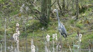 Female Birds Heron Water In Jungle