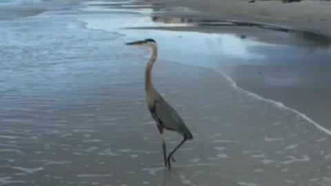 Florida morning visitor