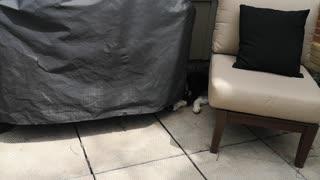 Husky can sleep anywhere
