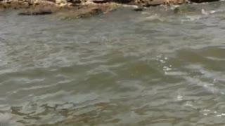Fishing Failure