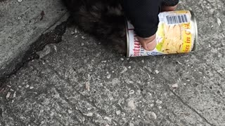 Stray Cat Saved From Being Stuck in a Can