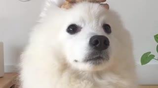 Zen Dog Challenge!