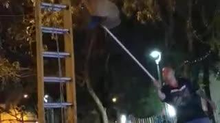 Video: Oso perezoso fue rescatado en Floridablanca