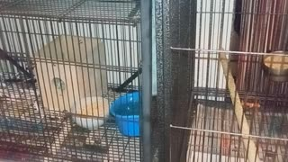 Parakeets Paradise 3
