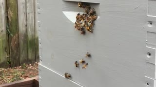 SLO-MO bees