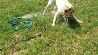 Dog biting water game