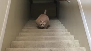 Fat Cat Stair Workout