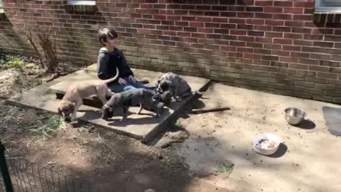Quinton and the pups